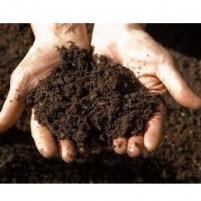 PT - Soils